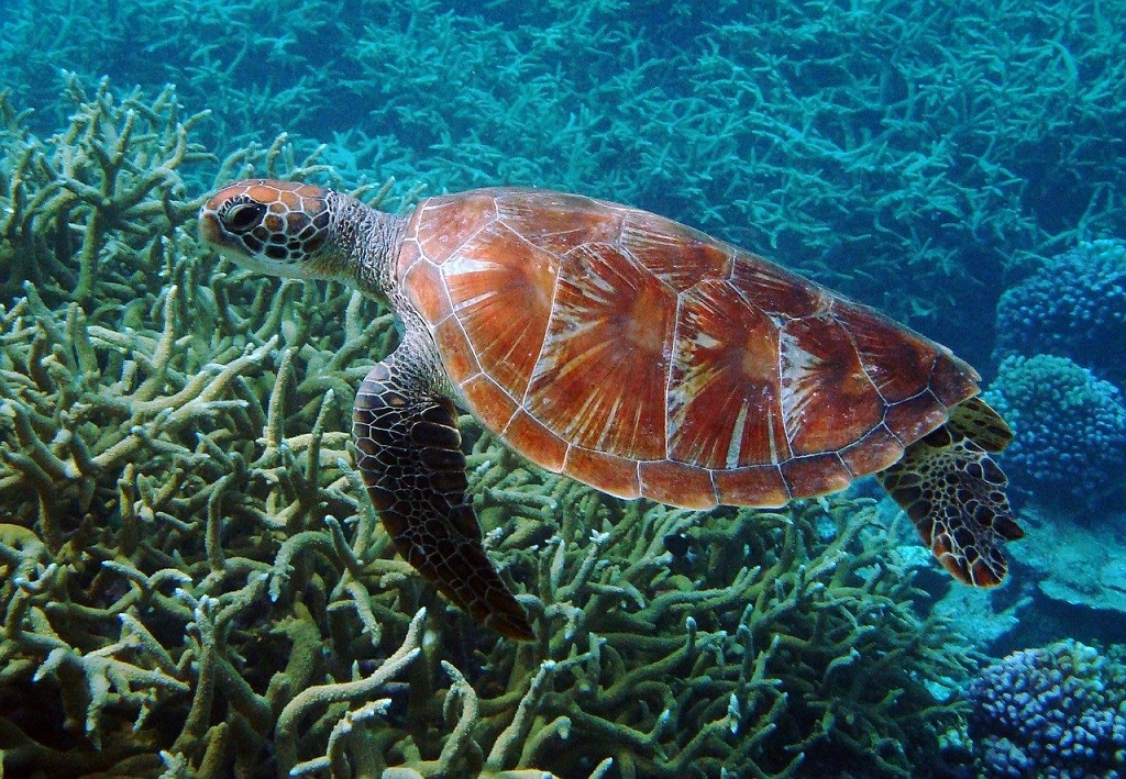 sea turtle swimming on the bottom of the ocean